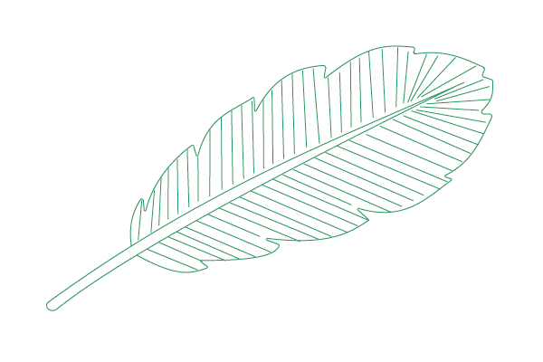 Feather-01
